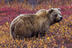 Alaska reizen - Wild Alaska